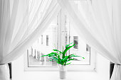 White sheer curtain texture background in daylight atmosphere of apartment's interior and green flower in flowerpot on the window sill. Black and white transparent curtain background.Curtain made of a