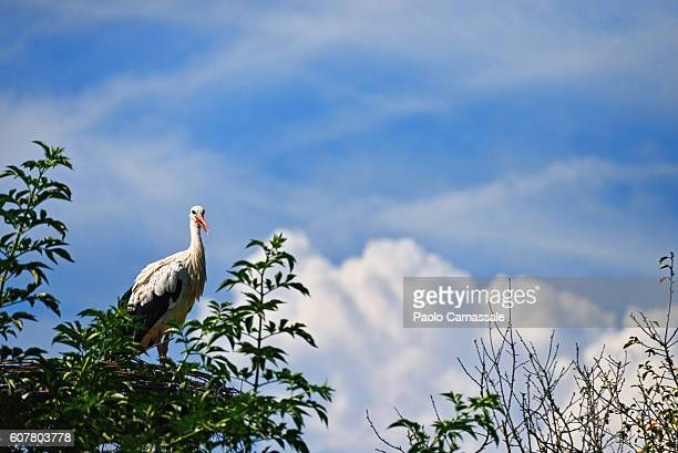 White stork in the nest against the sky