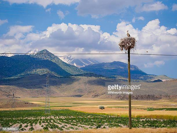 White Stork on nest and view to Mt Ericyes, Turkey