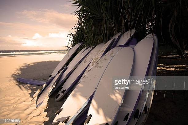 White surfboards leaning against palm trees on beach