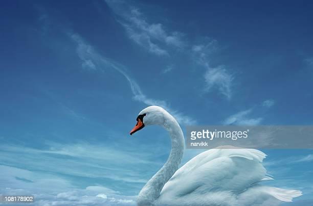 Blanc Swan