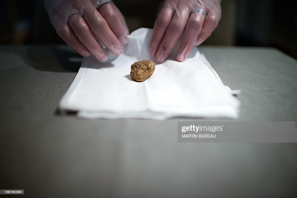 A white truffle is wrapped in a gauze at the Maison de la Truffe (House of Truffle) shop and restaurant on December 10, 2012 in Paris. The white truffle is a rare and expensive mushroom found in the Piedmont region, northern Italy. AFP PHOTO MARTIN BUREAU