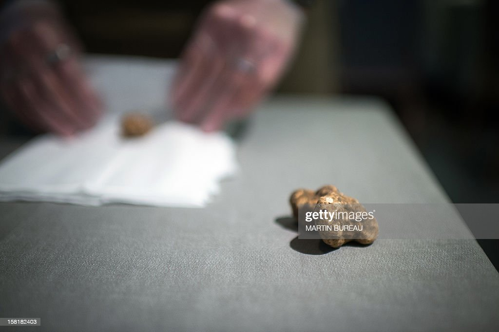 A white truffle is wrapped in a gauze at the Maison de la Truffe (House of Truffle) shop and restaurant on December 10, 2012 in Paris. The white truffle is a rare and expensive mushroom found in the Piedmont region, northern Italy.