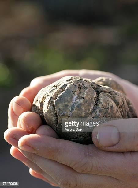 A white truffle. (close-up)