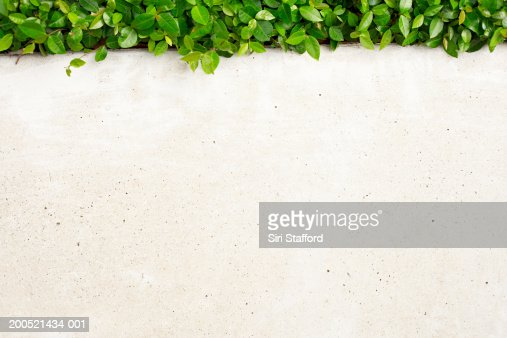 White wall with urban landscaping : Stock Photo