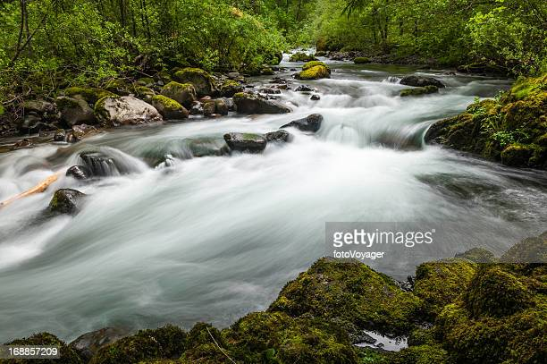 White water river rushing through green forest wilderness