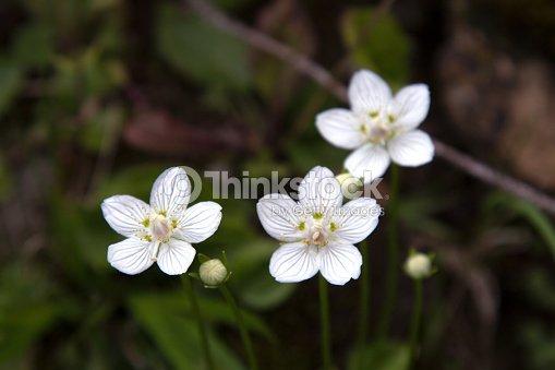 White wild flowers stock photo thinkstock white wild flowers stock photo mightylinksfo