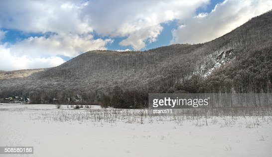 White winter : Stock Photo