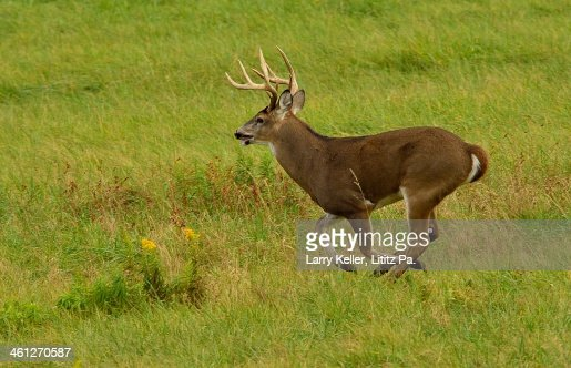 whitetail singles Ox ranch is the most exciting whitetail deer hunting ranch in texas we have over 18k acres of whitetail deer hunting, tank driving & shooting, caving etc.