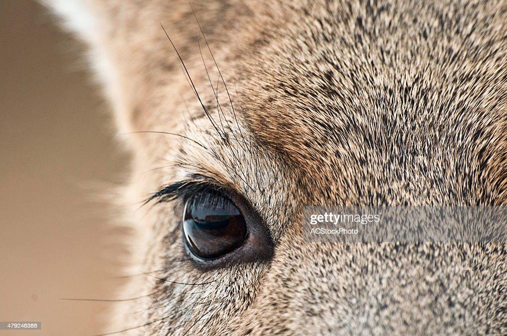 Whitetail Deer Eye Diagram Anatomy - House Wiring Diagram Symbols •