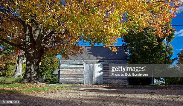 Whitewashed barn under golden tree