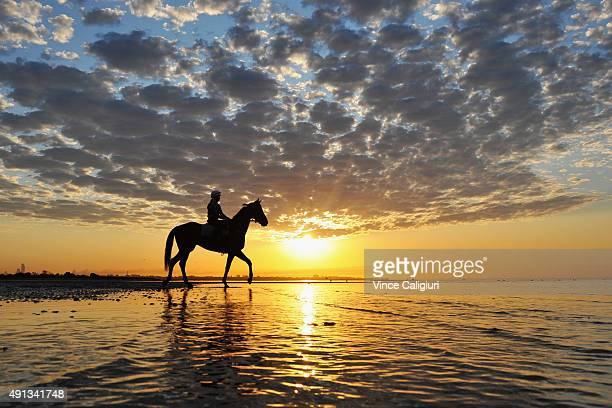 Who Shot Thebarman from the Chris Waller stable walks through the shallow waters during a trackwork session at Altona Beach on October 5 2015 in...