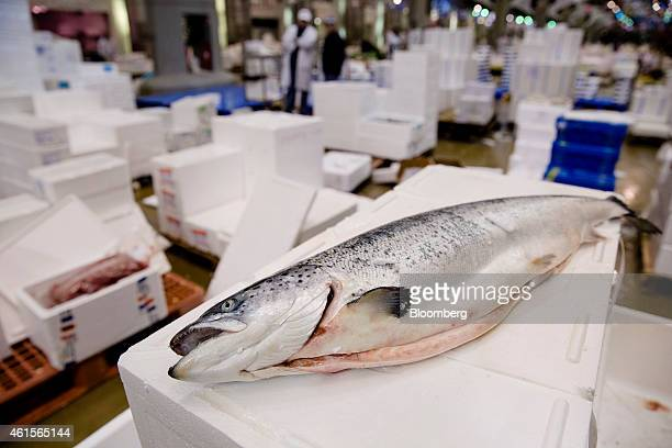 A whole salmon sits gutted on a packing crate in the seafood and fresh fish area of Rungis wholesale food market in Rungis France on Thursday Jan 15...