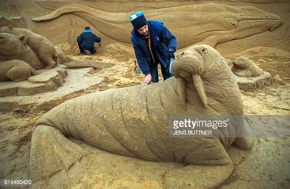 Wiaczeslaw Borecki from Poland inspects a walrusshaped sand sculpture on March 9 2016 in Binz on the Baltic Sea island of Ruegen northeastern Germany...