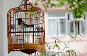Wicker bird cage with bird hanging outside house