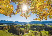 wide angle panoramic view to rural landscape in Bavaria with alps mountains and sunbeams behind beech tree in autumn