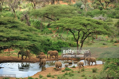 Wide angle photograph of some grey elephants at a waterhole