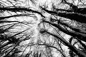 A wide angle view of trees from below, with branches creating textures.