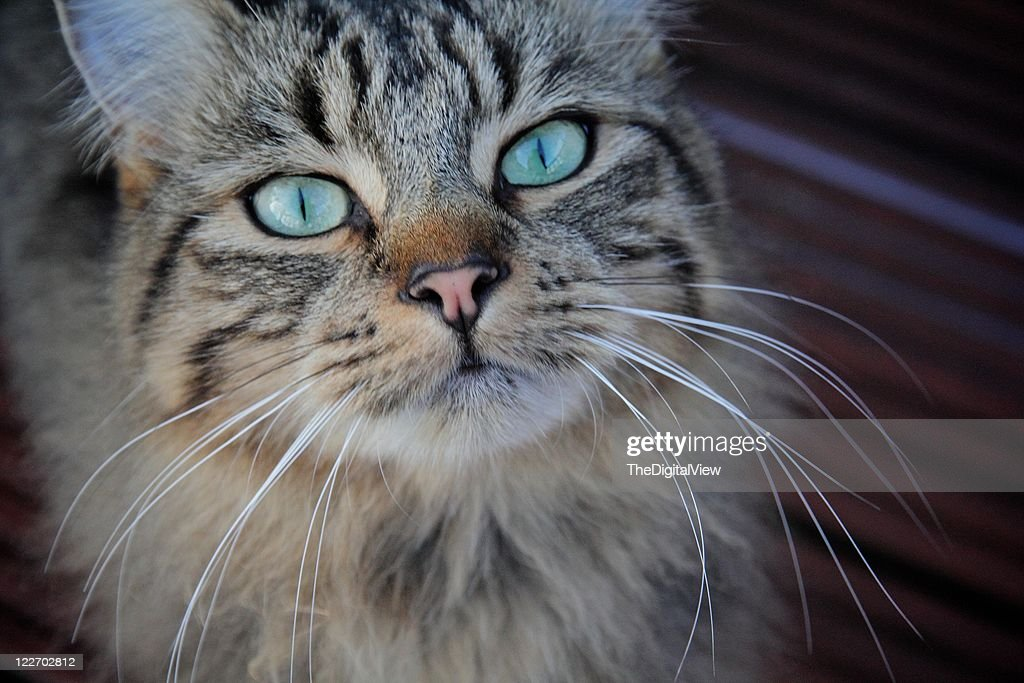 Wide eyed Tabby cat : Stock Photo