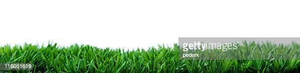 Wide grass