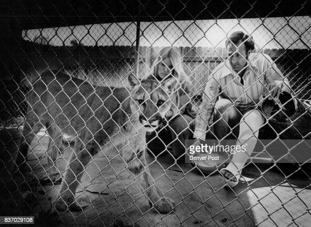 Wide Open Spaces of the West Prove Elusive for Shana The pet cougar peers questioningly from her chainlink cage as owners Jerrell and Janice Smith...