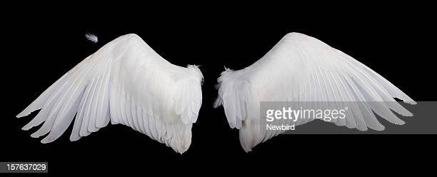 Wide white feathered wings against a black background
