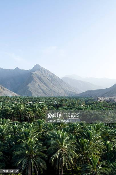 A date palm tree grove fills a desert valley floor beneath jagged mountain peaks.