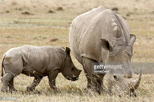 Africano salvaje Rhino Madre y bebé de pastoreo por Lake Shore