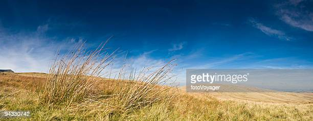 Wild and windswept grassland