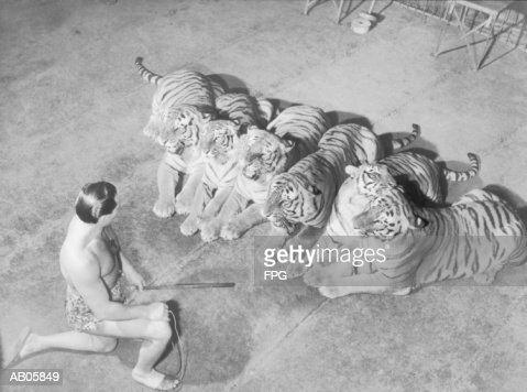Wild animal tamer kneeling in front of row of tigers (B&W) : Stock Photo