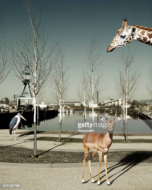 Wild animals in the city, Composite