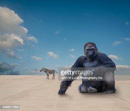 Wild animals on flat concrete ground under blue sky