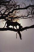 Wild animals on tree