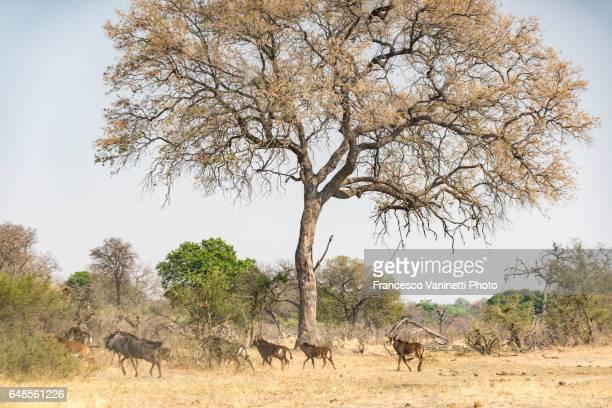 Wild animals under a tree.