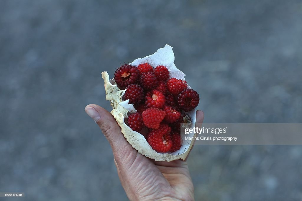 Wild berries : Stock Photo