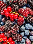 Wild blueberries, blackberries and red currant in Tasmania, Australia.