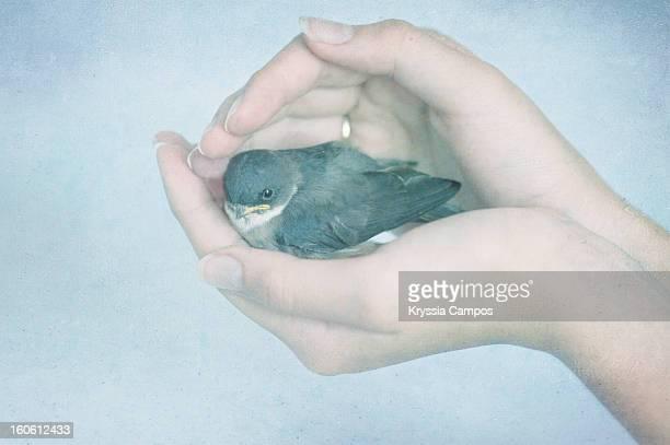 Wild bird on girl hands