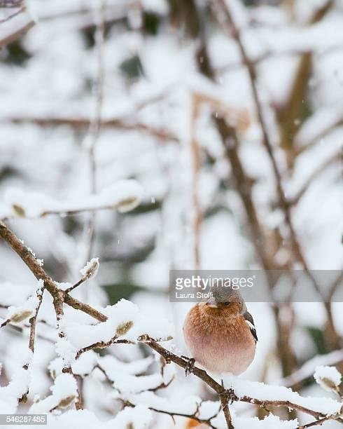 Wild bird perching on covered in snow shrub branch
