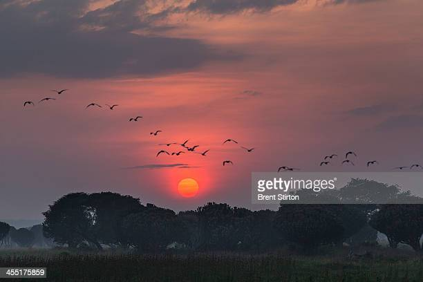 Wild birds fly over the reserve at Kavanyongi village on august 10 2013 in the north of Lake Edward Democratic Republic of the Congo Kavanyongi is in...