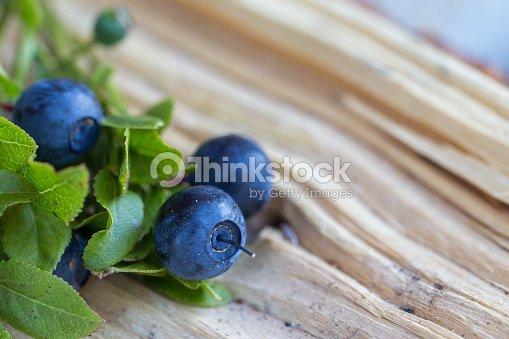 Bayas Salvaje azul : Foto de stock