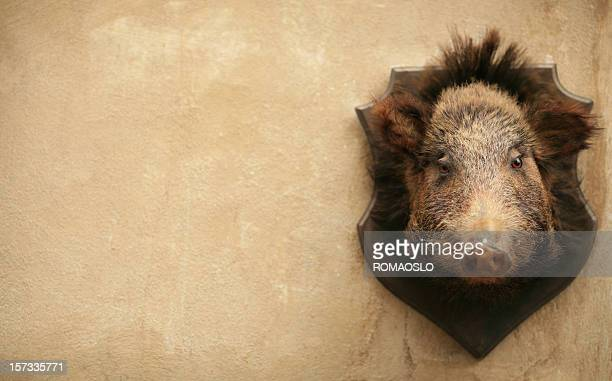 Wild boar sur un mur à Volterra, toscane, Italie
