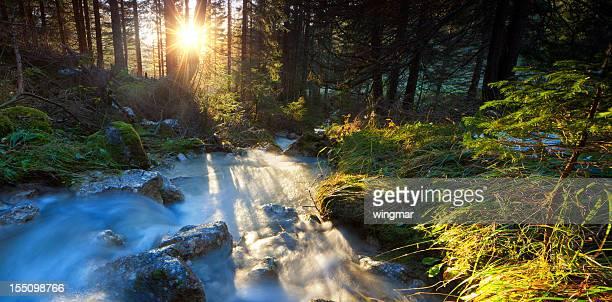 wild cascade mit fließenden Wasser in einem Holz