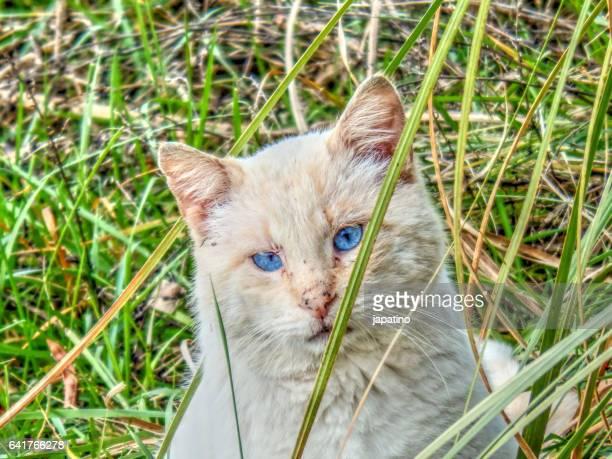 wild cat with blue eye