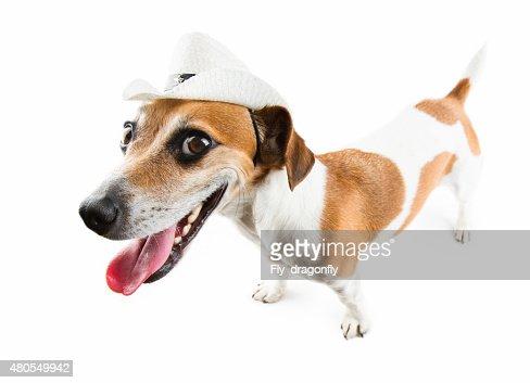 Perro salvaje tonos : Foto de stock