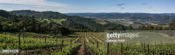 Wild Creek Vineyard cabernet sauvignon located on a nearby mountain hillside is viewed on May 5 near Cloverdale California After record winter...