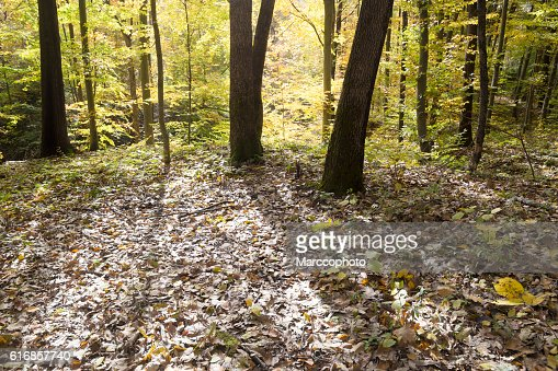Wild deciduous forest floor on sunny autumn day : Stock Photo
