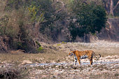 Bardia National Park, Teraî, Nepal
