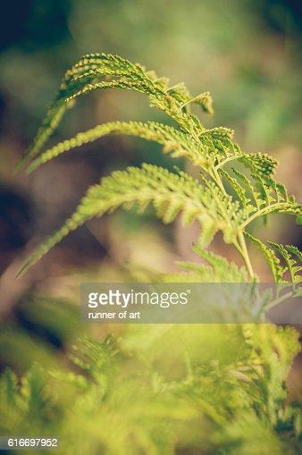 Wild Fern : Stock Photo