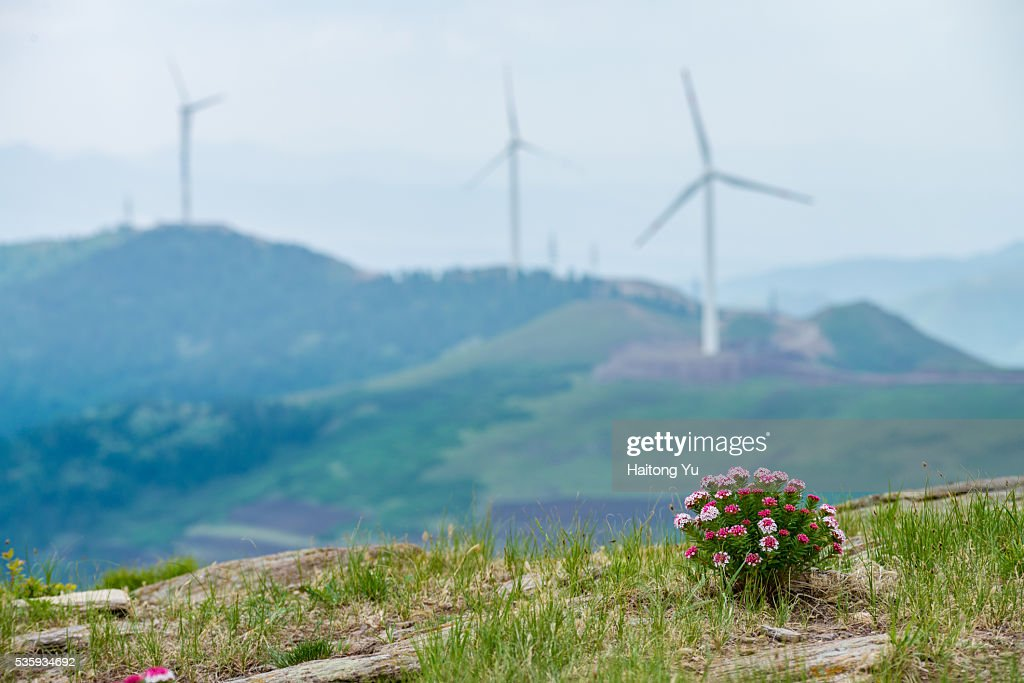 Wild flower in front of wind farm : Stock Photo