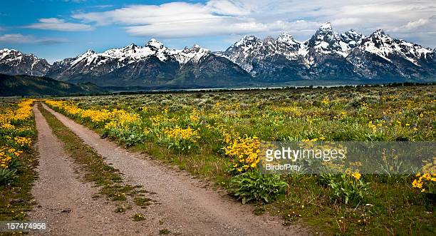 Wild Flowers and the Grand Tetons.